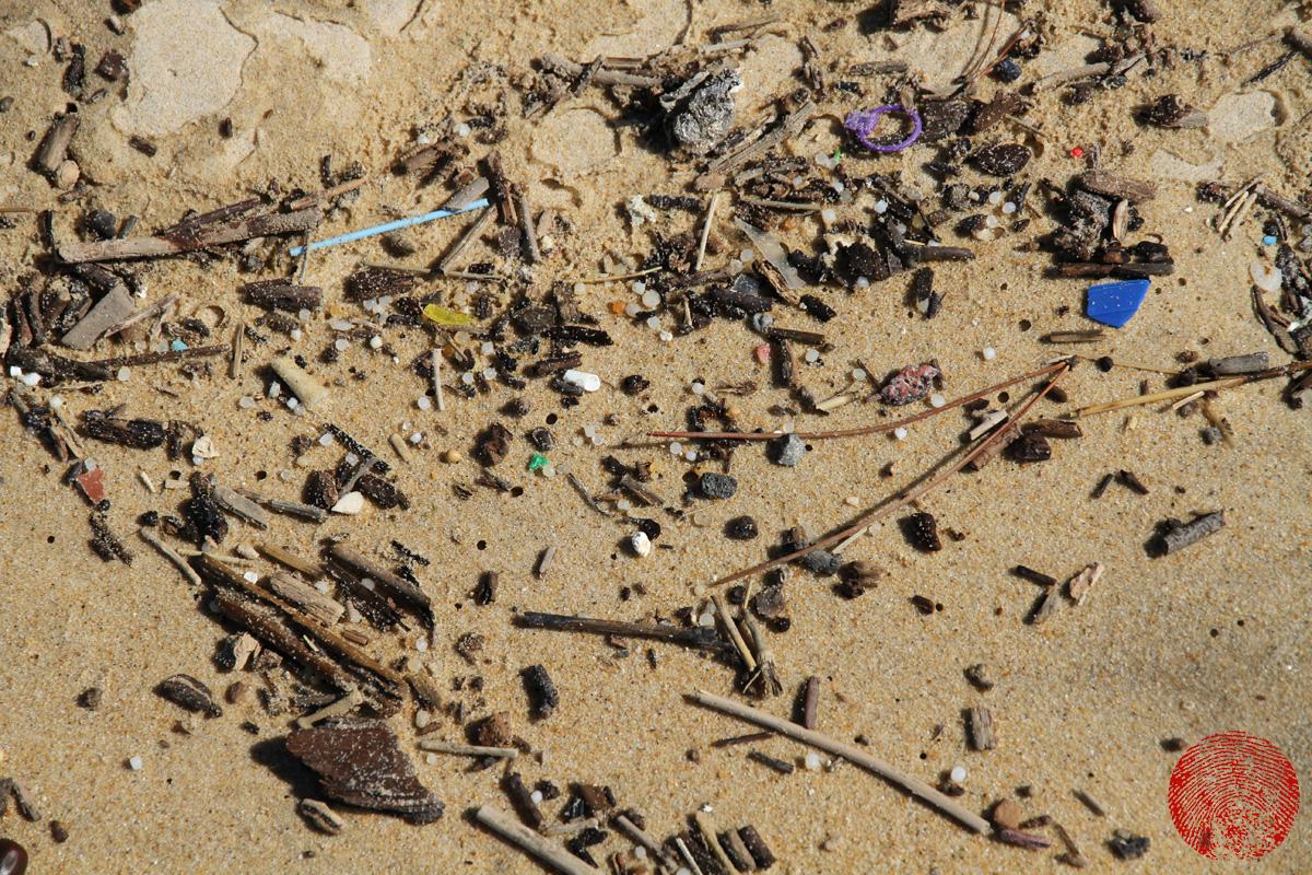 plastic litter in strandline of french beach